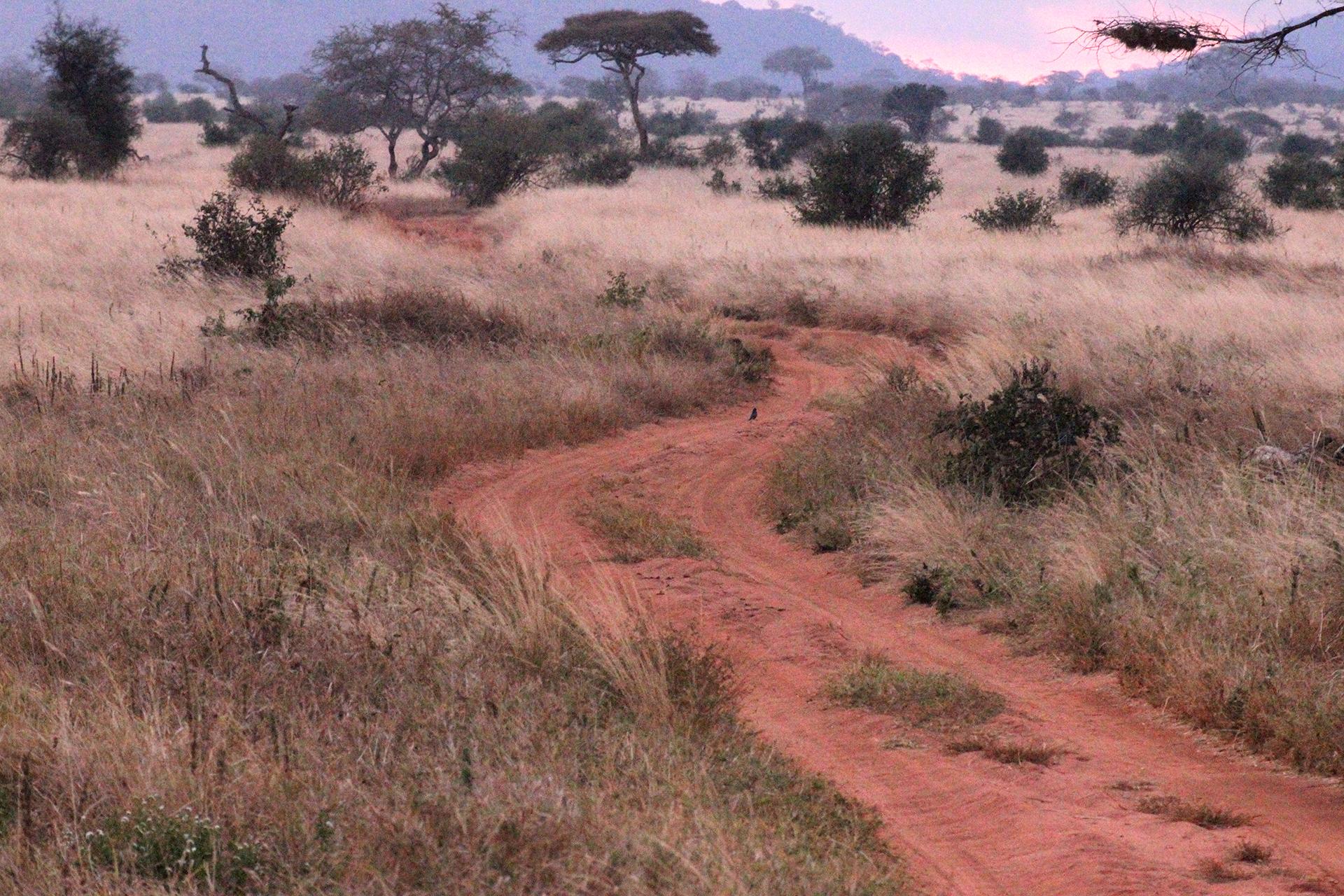 strada in trra rossa africana durane il tramono