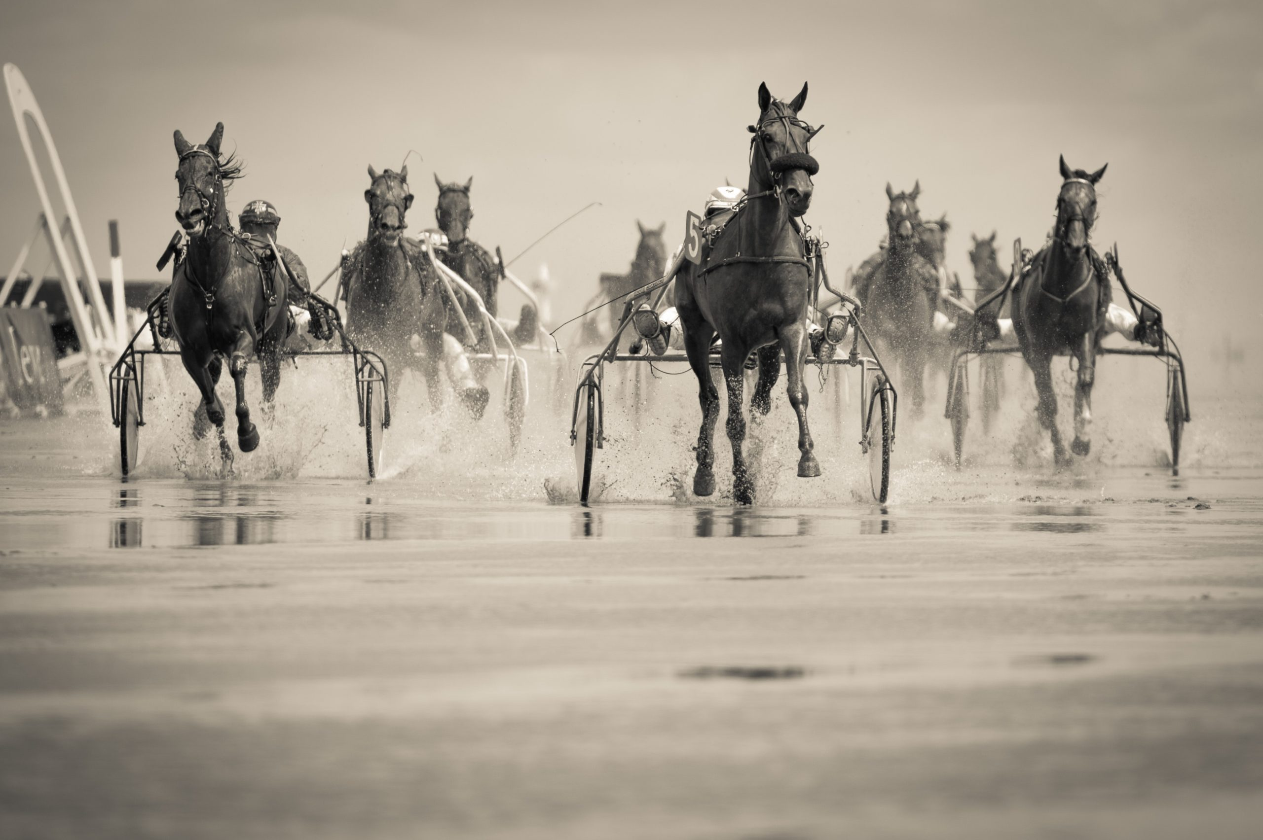 Cavalli Purosangue